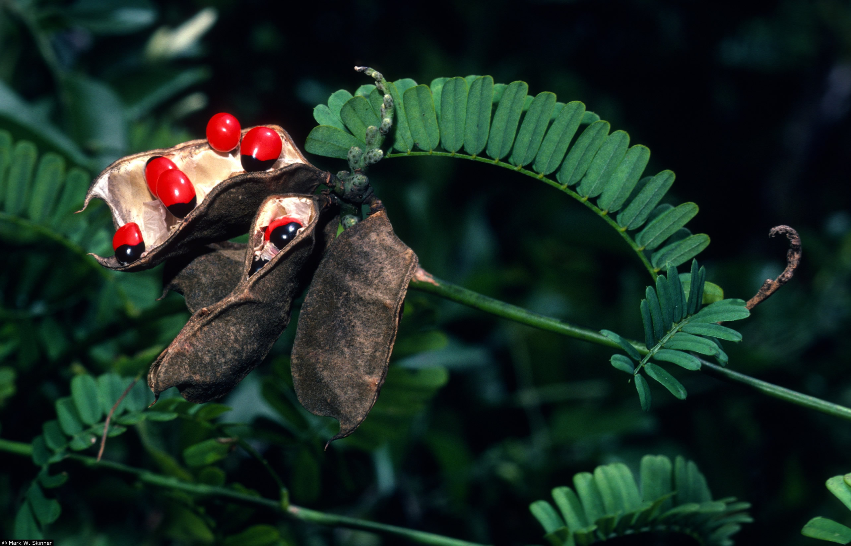 szabálytalan vörös folt a bőrön psoriasis painful ankle